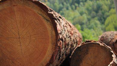 Photo of Ci vuole il legno