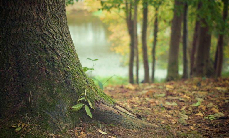 wwf, biodiversità, natura