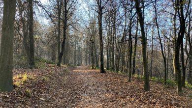 Photo of Sentieri di città, Torino e il suo percorso dei parchi