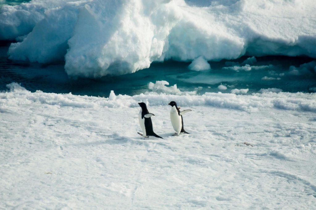 pinguini, antartide, rompighiaccio