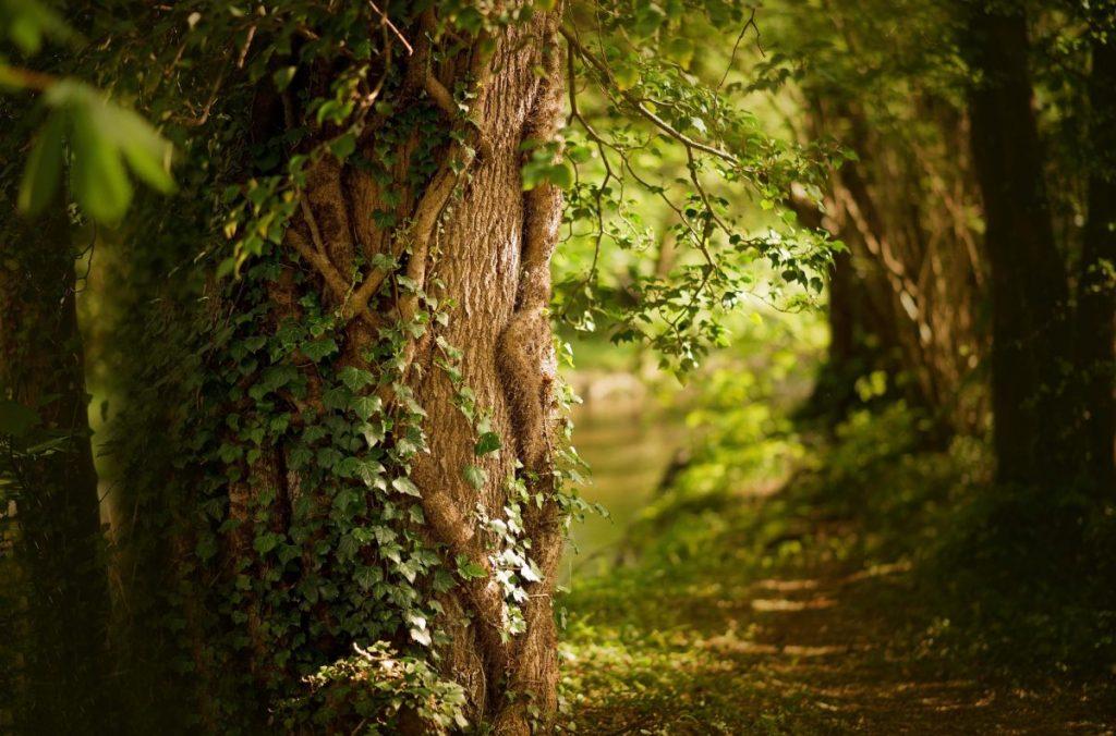 parchi, green
