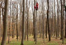 """Photo of """"Tree Time"""". Online il nuovo spazio virtuale dedicato alla mostra del MUSE e Museo Montagna"""