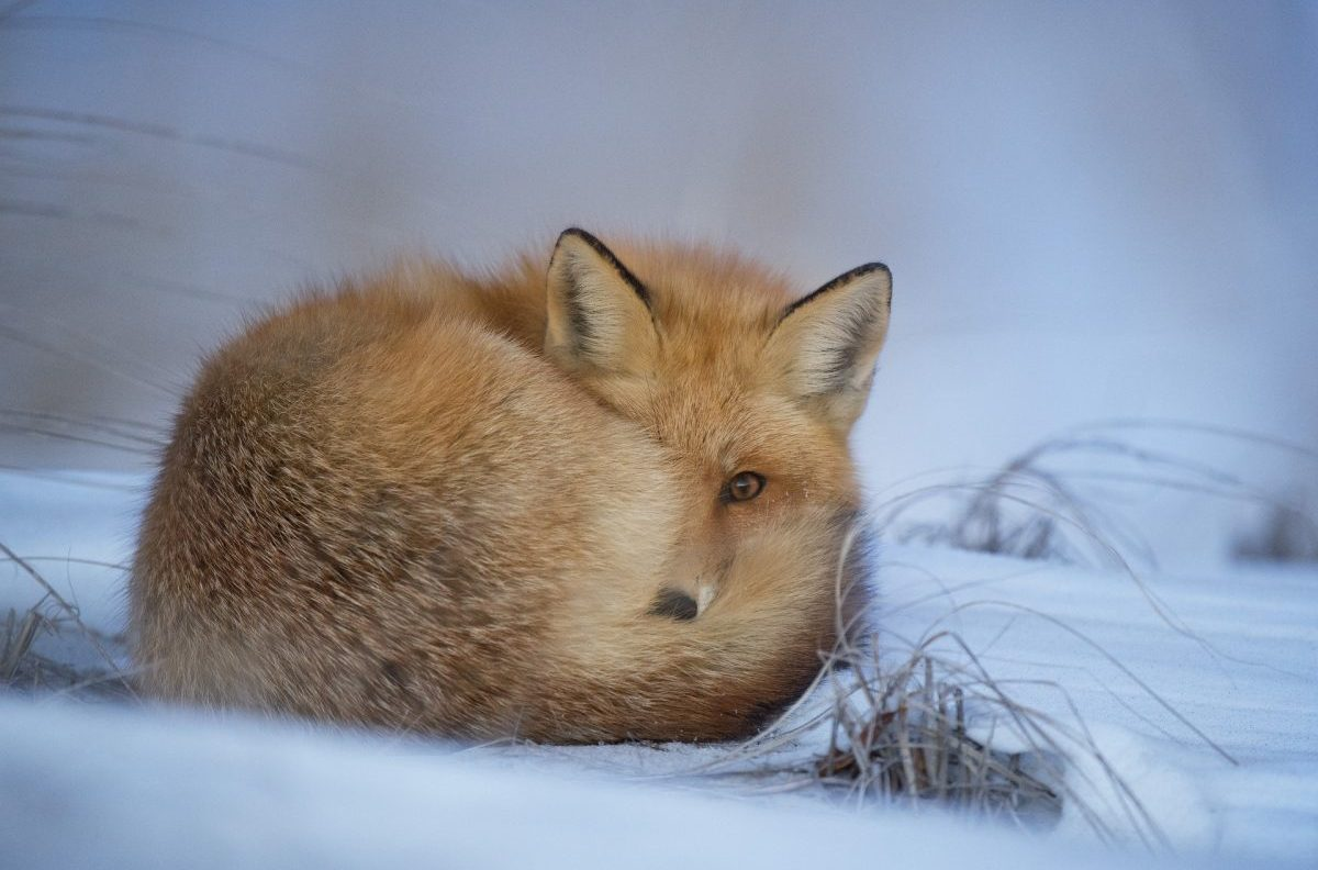 fauna, sat, inverno
