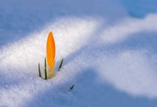 Photo of Sole e temperature primaverili. Un weekend da gustare, con prudenza!