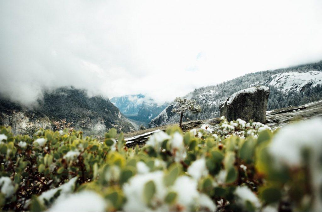 ghiacciai, biodiversità