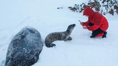 Photo of Antartide. Lo scioglimento dei ghiacciai si studia con l'aiuto delle foche