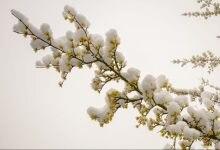 Photo of Nel weekend calo termico e qualche nevicata. Ancora attenzione alle valanghe!