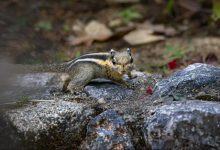 Photo of World Wildlife Day 2021. Tutelare le foreste per il bene dell'uomo e del Pianeta