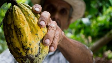 Photo of Sono nate prima le Ande o il cacao?