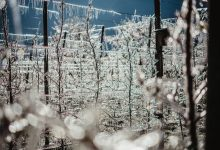 Photo of Come il ghiaccio protegge i meleti dalle gelate primaverili