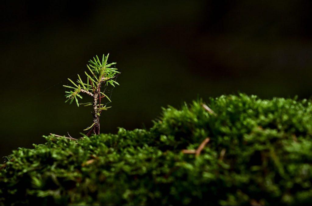 boschi, foresta, albero