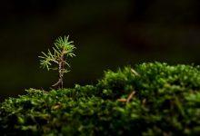 Photo of Dal biglietto del concerto che si paga in alberi alla Climbers Forest, idee innovative da cui nascono nuovi boschi