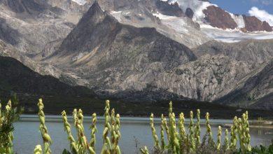 Photo of Altopiano tibetano: nelle praterie alpine biodiversità maggiore che nelle foreste