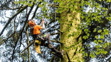 Photo of Dove si trova l'albero autoctono più alto d'Italia?