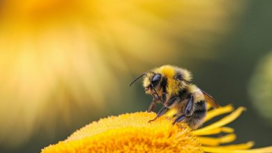 Photo of Giornata mondiale delle api. Il miele è sempre buono, quello di montagna un po' di più!