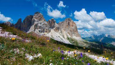 """Photo of Giornata Internazionale della Biodiversità: """"Siamo parte della soluzione"""""""