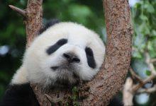 Photo of Buon compleanno WWF, 60 anni di impegno per la natura