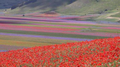 Photo of Regole e divieti per vedere la fioritura di Castelluccio di Norcia