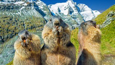 Photo of 7 esperienze per scoprire la fauna selvatica nei Parchi Nazionali
