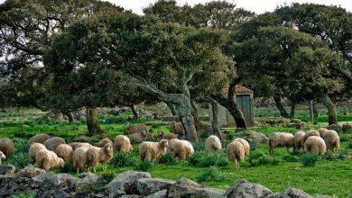 """Photo of """"Sa paradura"""". In Abruzzo scatta la solidarietà verso i pastori sardi"""
