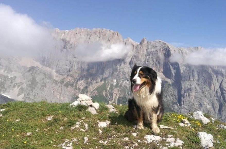 borghi, pet friendly