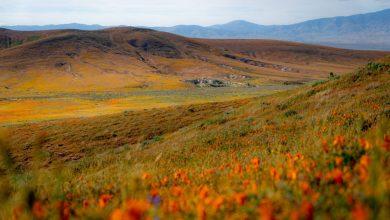 Photo of Da Castelluccio a Fairy Meadows, un viaggio tra i colori delle valli fiorite