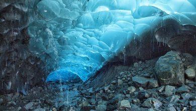 Photo of Alaska. L'antica foresta nascosta sotto il ghiacciaio