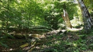 Photo of Sale il numero di foreste italiane Patrimonio UNESCO