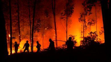 Photo of Aspromonte, gli incendi che cancellano il Parco