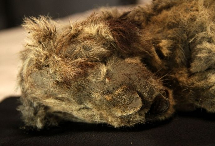 leone, siberia, permafrost