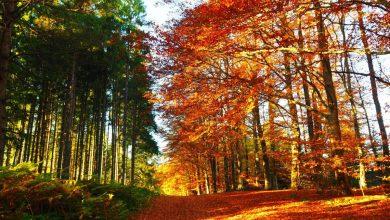 Photo of 5 boschi in cui vivere la magia del foliage d'autunno