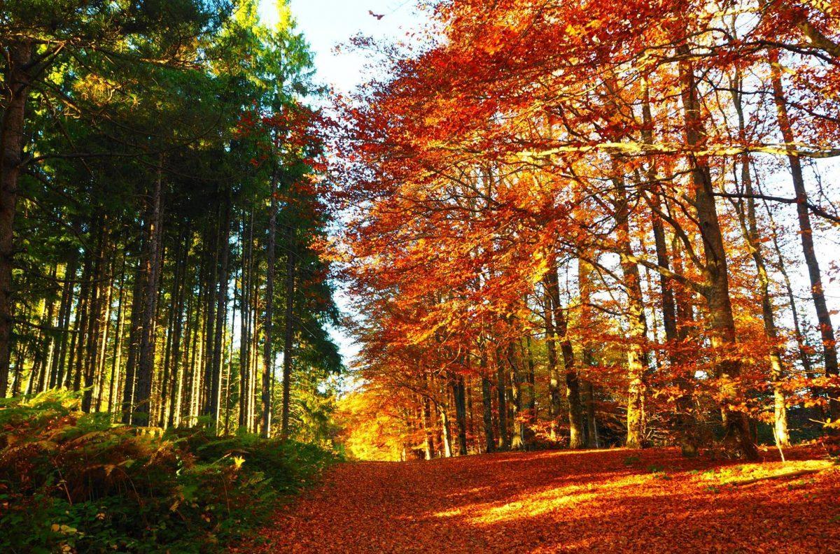 autunno, foliage