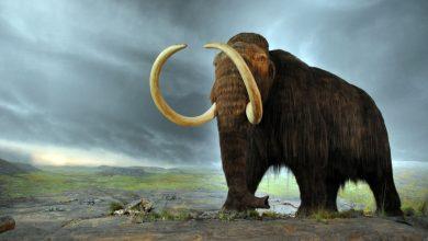 Photo of Scienziati pronti a riportare in vita il mammut per salvare il permafrost