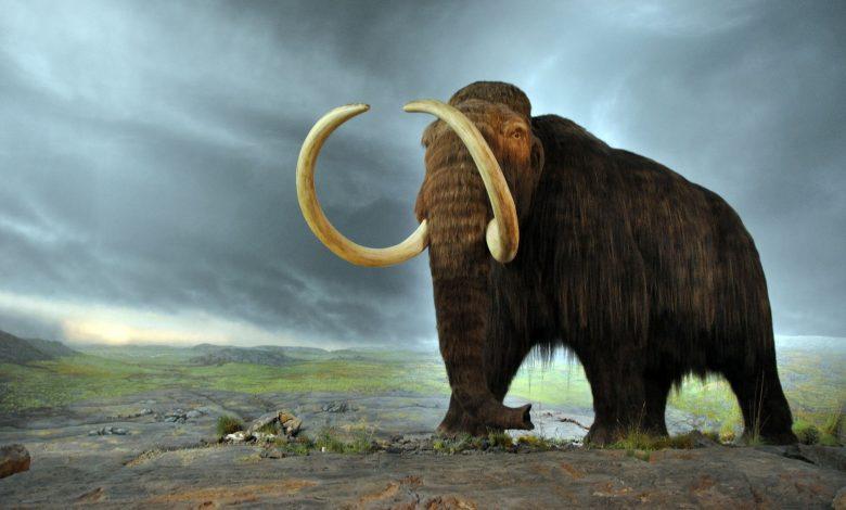 mammut, genetica, era glaciale