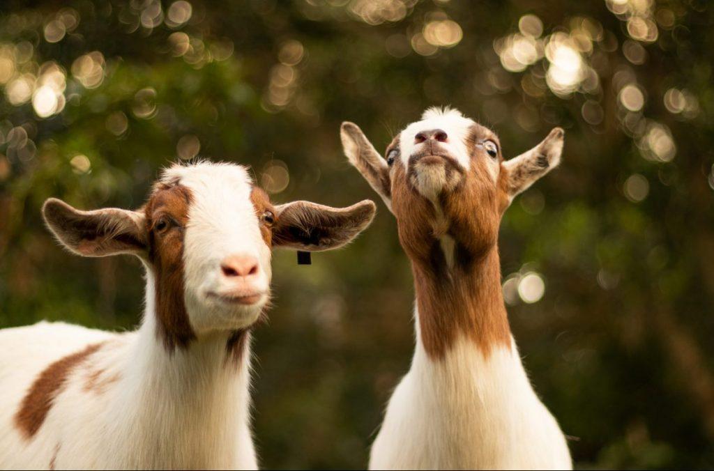 capre, etna