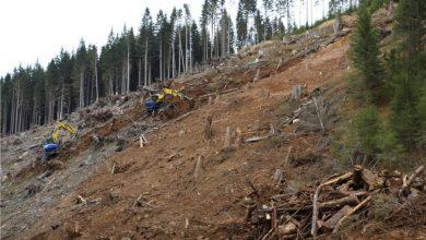 Photo of Tempesta Vaia: evento speciale per raccontare la rinascita di un territorio ferito