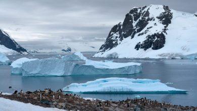 Photo of Maori in Antartide: primi a scoprirla o primi a inquinarla?