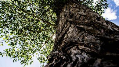 Photo of SilvaCuore, l'App che aiuta a monitorare la salute delle foreste